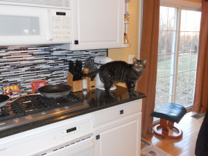 Who, me? No, I'm not standing on the kitchen counter! It's all an illusion...